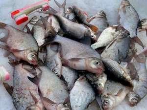 Рыбалка на Истре в Подмосковье