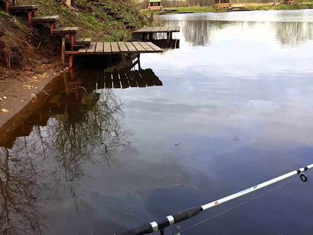 платный пруд в машково рыбалка без границ